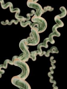 Borrelia burgdorferi are in the form of spirochetes which makes Lyme disease difficult to treat